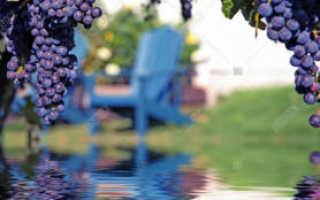 Вода и виноград