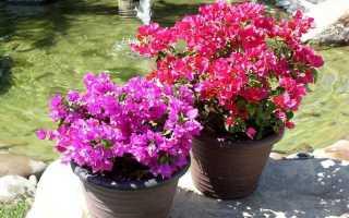 Многолетние Флоксы: выращивание из семян, посадка и уход цветов