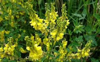 10 красивых желтых цветов: названия, описание, уход, полезные свойства