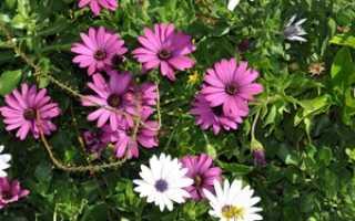 Список из 31 лучших однолетних растений: какие относятся