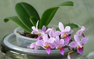 Как выращивать орхидеи: в домашних условиях, как вырастить из семян