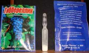 Как развести гиббереллин