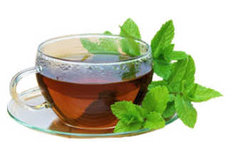 Мята: польза и вред для организма человека, для мужчин и женщин, чай