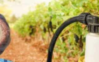 Первые обработки виноградника