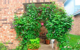Лианы на даче: 5 лучших вьющихся цветов для сада