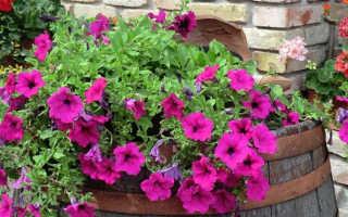 10 ампельных растений для сада: что это такое, описание, названия и фото