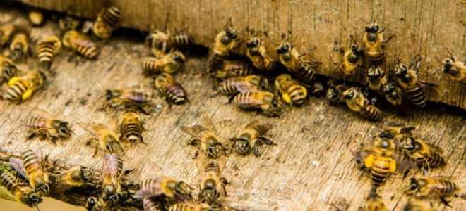 Что можно сделать с кислотой в пчеловодстве