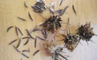 Космея: посадка и уход в открытом грунте, выращивание из семян, когда сажать