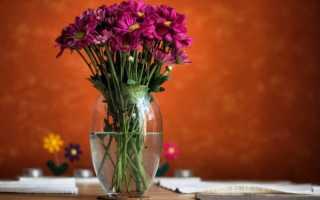 Хризантемы в вазе: как сохранить дольше